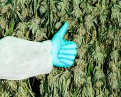 Cannabis Products Help Improve Your Quality of Life